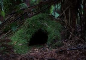 cave-1566205_1280