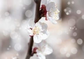 flowers-4093284_1280